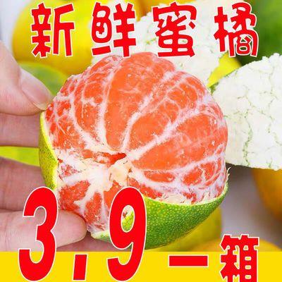 【现货秒发】云南蜜橘子新鲜甜蜜橘青皮桔子批发薄皮蜜桔青橘柑橘