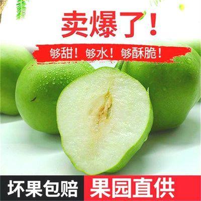 陕西早酥梨子10斤新鲜批发价薄皮梨子香酥密梨水果整箱急速发包邮