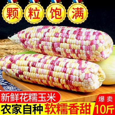 新鲜花糯玉米3斤5斤9斤现摘当季整箱甜玉米棒子苞谷粒水果玉米