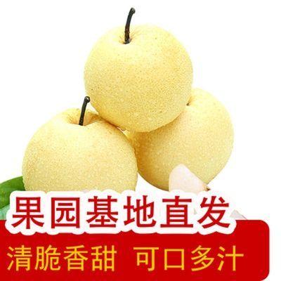 正宗山西酥梨贡梨水晶蜜梨应季水果止咳现货梨子新鲜10斤整箱批发
