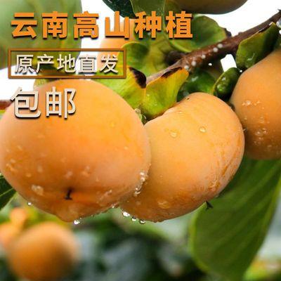 正宗云南现摘脆柿子新鲜水果当季时令巧克力甜柿子整箱2/5/10斤