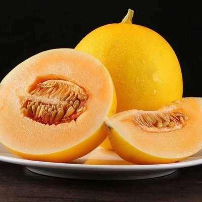 黄河蜜瓜新鲜时令水果黄河蜜甜瓜应当季小瓜非哈密香瓜包邮