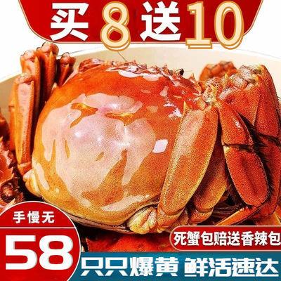 大闸蟹10只装螃蟹鲜活公母蟹现货黄海鲜水产清水湖蟹大闸蟹螃蟹