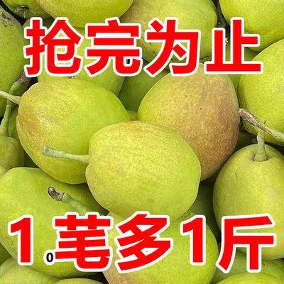 【脆甜】香梨红香酥梨新鲜水果酥梨1/5/10源自新疆库尔勒香梨孕妇