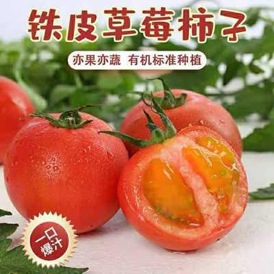 新鲜铁皮草莓柿子甘肃柿子新鲜应季2021新货特产西红柿自然熟蕃茄
