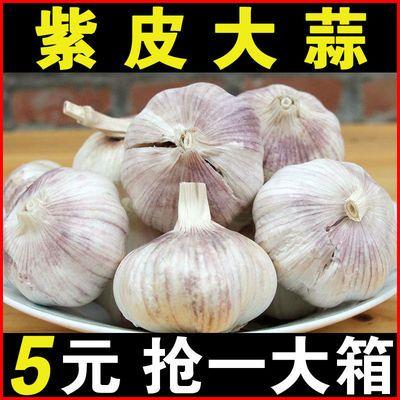 大蒜10斤山东济宁大蒜新蒜干蒜紫皮大蒜蒜头农家大蒜头可发芽1斤