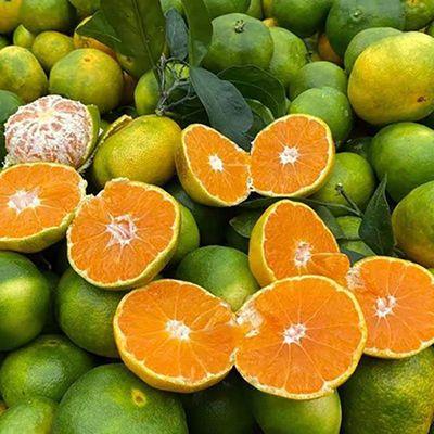 现摘现发无籽橘子水果新鲜蜜桔应季孕妇青桔子批发薄皮整箱包邮