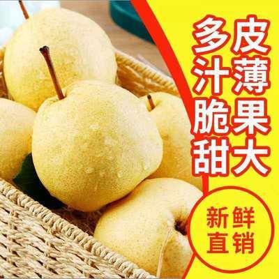 【酥梨】山西梨子酥梨批发价化痰整箱9.5-10斤