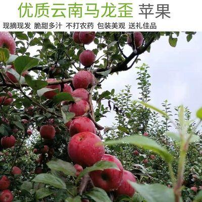 云南马龙歪苹果新鲜当季水果丑苹果整箱现摘龙威嘎啦青红富士平果