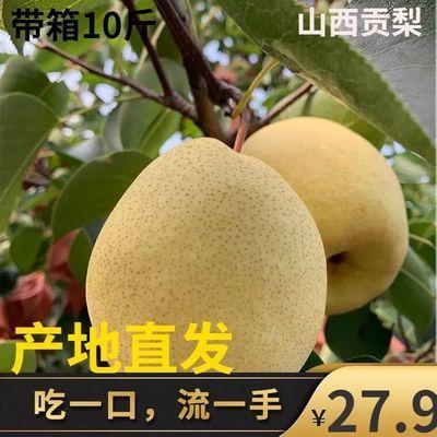 山西贡梨薄皮酥梨雪梨蜜梨优质新鲜梨子水果整箱十斤批发冰糖雪梨