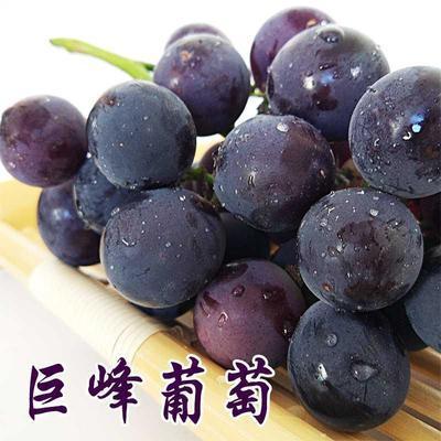 75593/烟台巨峰葡萄新鲜不打药有籽易剥皮正宗产地直发孕妇葡萄水果