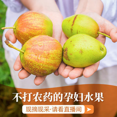 水果新鲜香梨子当季批发应季水果皮薄超甜3/10斤薄皮一整箱第一名
