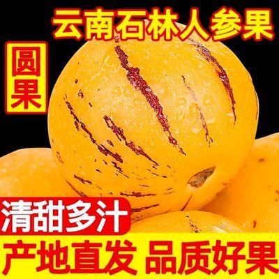 现摘现发精品云南特产石林人生果人参果树熟圆果黄肉应季新鲜水果