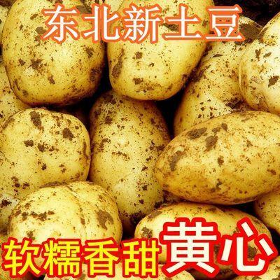东北大土豆当季沙地黄皮黄心土豆新鲜蔬菜洋芋马铃薯带箱5斤包邮
