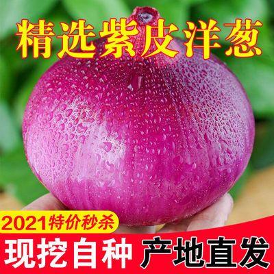 76263/甘肃紫皮洋葱新鲜10斤洋葱头现挖脆甜洋葱当季蔬菜自种批发价整箱