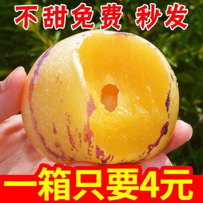 【圆果黄肉】云南石林人参果当季新鲜孕妇水果人生果大果10斤批发