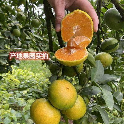 现货云南丑橘桔子蜜橘5/9斤整箱产地果园批发酸甜青皮橘子当季
