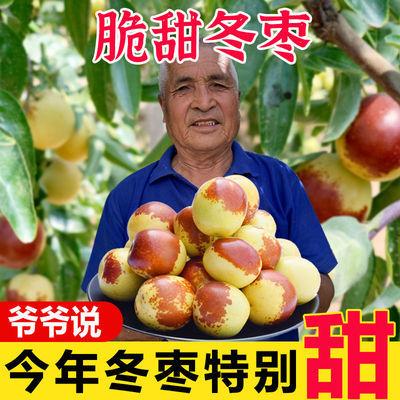 沾化冬枣正宗现货新鲜脆甜冬枣特级特大果应季水果批发非大荔冬枣