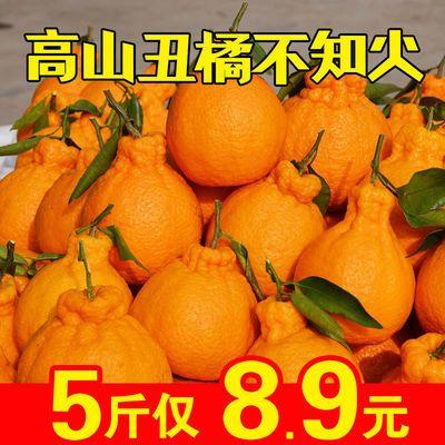 丑橘不知火桔子水果柑橘丑八怪丑柑橘子蜜桔孕妇新鲜水果整箱批发