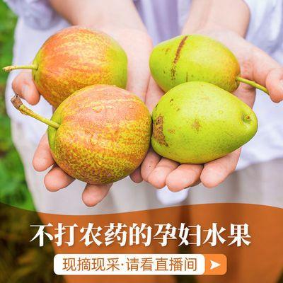 红香酥水果新鲜香梨子当季批发应季水果皮薄超甜一整箱