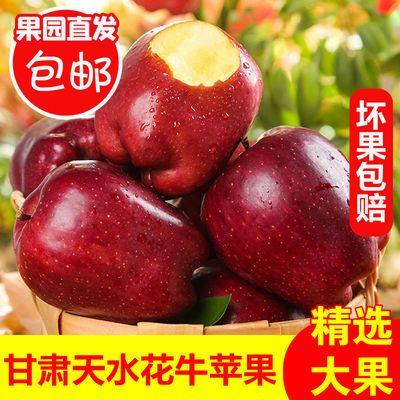 正宗甘肃花牛苹果当季新鲜采摘水果3/5/10斤蛇果包邮批发