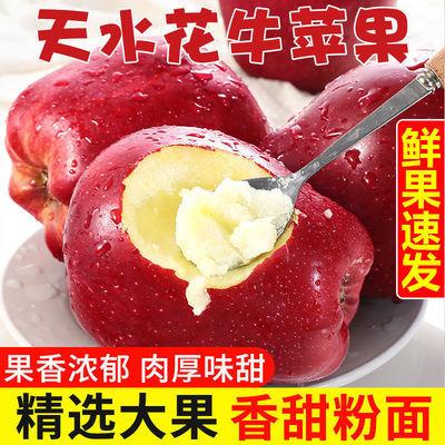 甘肃天水花牛苹果当季新鲜水果粉面刮泥3/5/10斤蛇果包邮批发