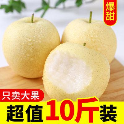 河北正宗皇冠梨现摘新鲜水果脆甜10斤超甜5斤薄皮多汁3斤优质大果