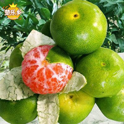 宜昌蜜桔薄皮橘子新鲜应季孕妇水果无籽酸甜青皮桔子柑橘批发10斤