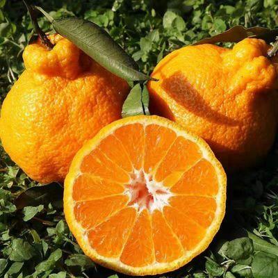 云南高原丑橘新鲜水果不知火丑八怪橘子当季孕妇水果粑粑柑橘包邮