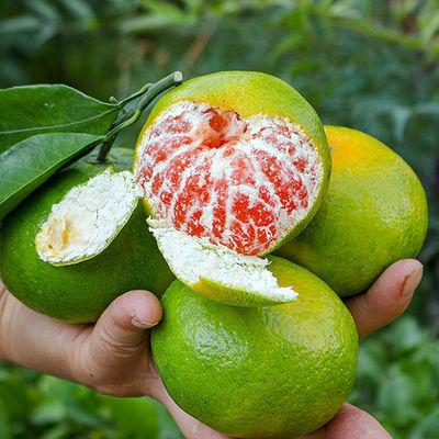 现摘蜜橘无籽新鲜超甜蜜橘应季水果青桔子批发5/10斤现货薄皮蜜桔