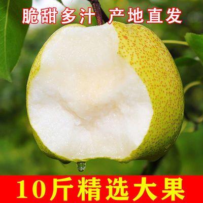 安徽砀山梨5/10斤应季水果梨子新鲜当季整箱包邮酥梨雪梨翠玉青梨