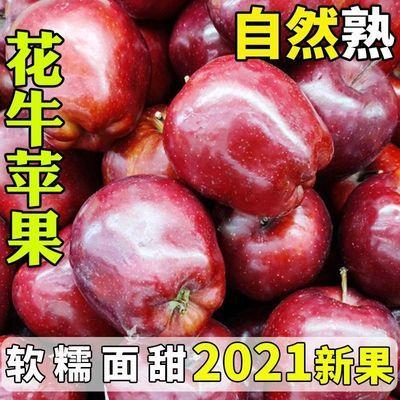 【新果】甘肃天水花牛苹果新鲜水果蛇果刮泥宝宝辅食3/5/10斤包邮