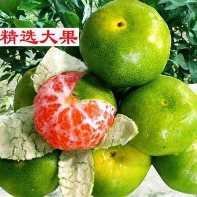 蜜桔青皮蜜橘新鲜水果桔子精品橘子甜非云南黄皮柑橘10斤/1斤/5斤