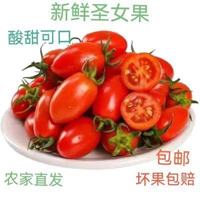 云南露天种植圣女果新鲜采摘水果小蕃茄产地直发老少皆宜2/3/5斤