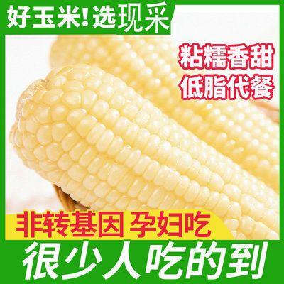 76444/新鲜白牛奶玉米农家自种现摘糯玉米黏真空包装粗粮批发蔬菜玉米棒