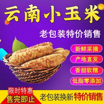 西双版纳小香糯玉米 新鲜减脂餐食材专用 现摘真空包装老包装批发