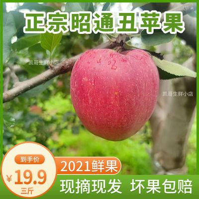75761/云南昭通丑苹果冰糖心水果野生新鲜脆甜当季整箱红富士野萍果平果