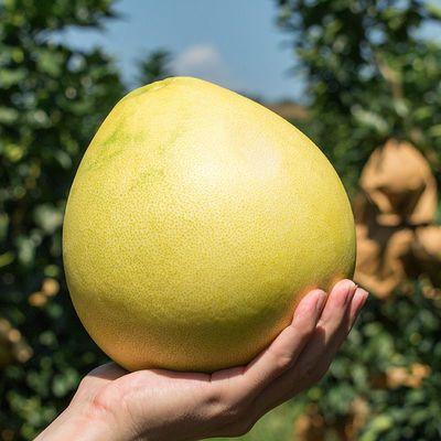 【酸酸甜甜】现摘现发新鲜柚子两个装单果900克以上多仓发货