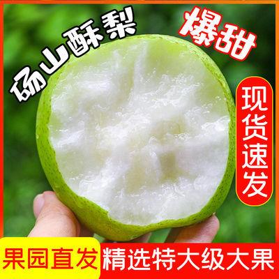 现摘应季砀山酥梨香甜酥脆当季新鲜水果青皮梨皇冠梨梨子10/2斤