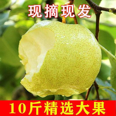 75421/酥梨10斤装梨子水果新鲜现摘当季水果整箱批发砀山梨青梨雪梨3斤