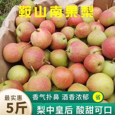75898/正宗鞍山海城南果梨南果梨10斤装东北特产水果香水梨醉梨软梨5斤