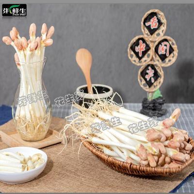 76541/现采新鲜花生芽脆嫩长寿苗芽菜非水培种植蔬菜沙拉配菜火锅素菜