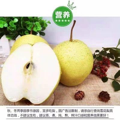 【河北大雪梨】雪花梨10斤5斤3斤新鲜水果批发非水晶梨砀山皇冠梨