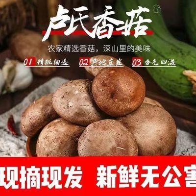 【现摘现发】新鲜香菇花菇冬菇鲜蘑菇批发食用菌煲汤特级蔬菜生鲜
