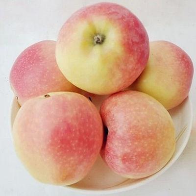 多仓发货 当季新鲜水果早熟苹果脆甜整箱批发包邮 个数随机