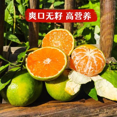 宜昌蜜桔新鲜现摘酸甜早熟无籽皮薄当季孕妇水果包邮橘子桔子蜜橘