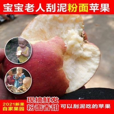 2021红香蕉红星粉面苹果宝宝刮泥辅食孕妇老人吃的当季新鲜苹果