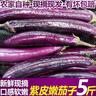 长茄子紫色软糯细茄子新鲜现摘当季蔬菜山东产地直发红烧茄子批发