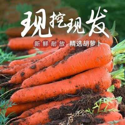 75518/内蒙古察右中旗草原红参胡萝卜5斤新鲜蔬菜产地直发批发