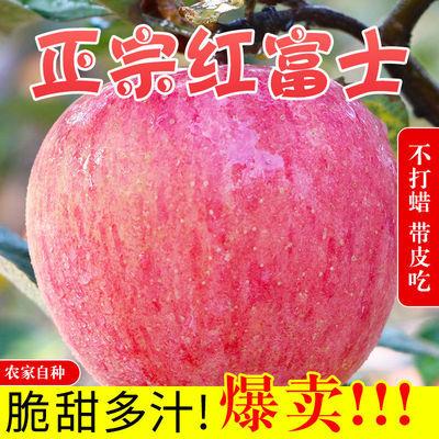 75848/现摘陕西红富士苹果正宗脆甜冰糖心苹果整箱批发当季新鲜水果批发